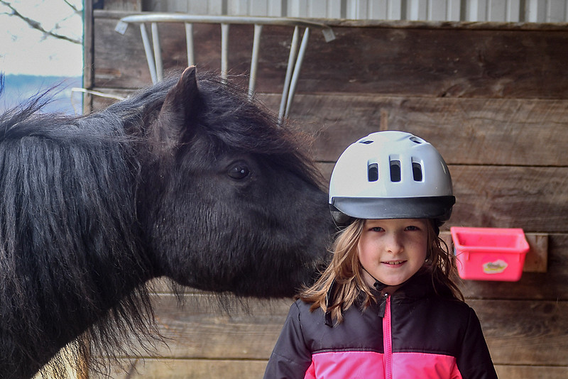 Love (Dartmoor pony) inspects my granddaughter