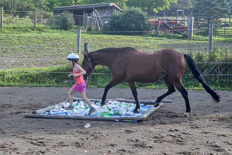 Brandy trots through the bottle field in step with her young handler