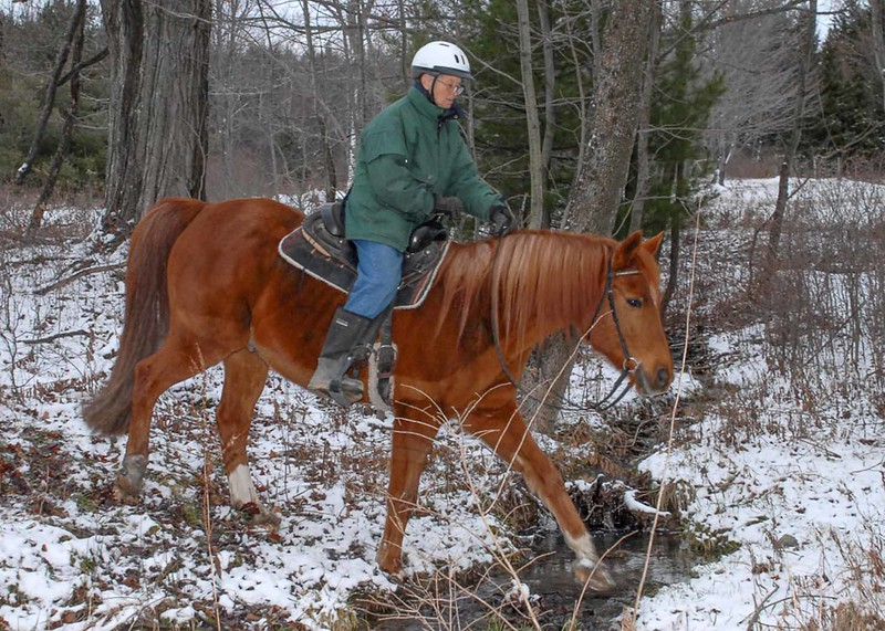 A good trail horse is confident in any terrain