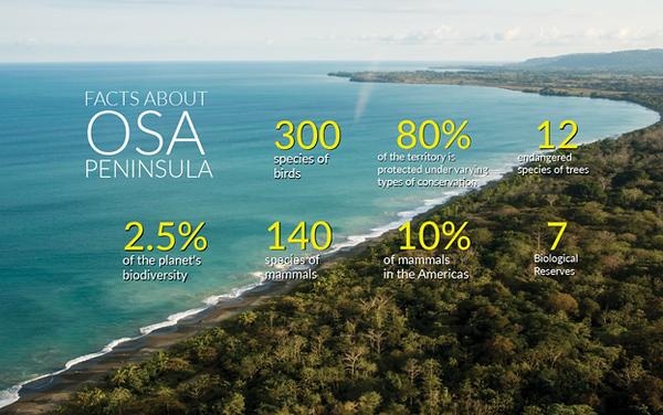 Osa Peninsula facts Ecotourism in Costa Rica Caminos de Osa