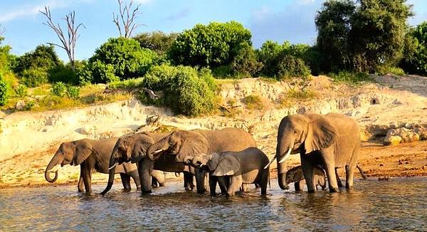 Elephants on Chobe River