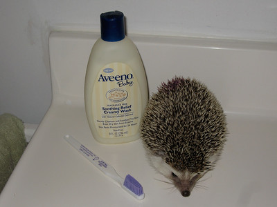 Hedgehog Bathing and Nail Clipping