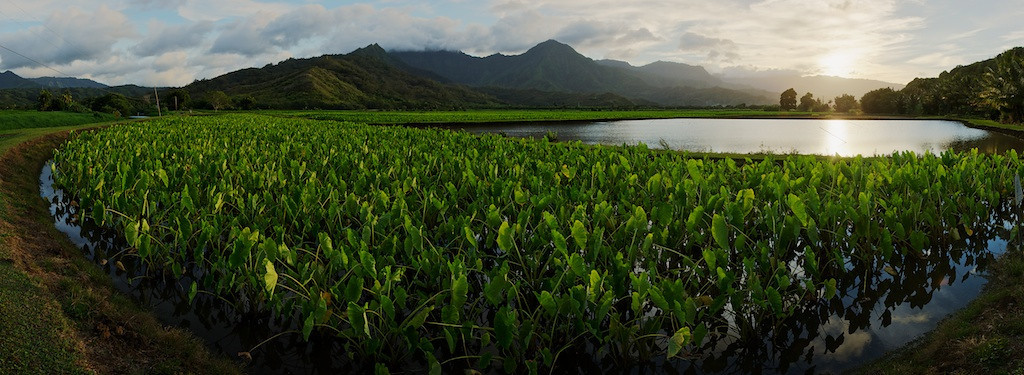 "Article - WHAT IS HDR?<br /> <br /> Hanalei National Wildlife Refuge at Sunset - Kauai, Hawaii.<br /> <br /> Link to Original Image:  <a href=""http://www.tom-hill.biz/Galleries/Scenics/AlaskaMidwayHawaii/i-DwzFk72/A"">http://www.tom-hill.biz/Galleries/Scenics/AlaskaMidwayHawaii/i-DwzFk72/A</a><br /> __________<br /> <br /> High Dynamic Range (HDR) photography is quite the rage nowadays.  I've been using this technique for 10 years with excellent results.  I guess I was an early adopter.  The technique has definitely become common-place the last four or five years.  Results from using techniques such as these makes the whole digital revolution in the photography world worthwhile.  But, HDR is not without its issues.  As you can see in our title image, the results can require compromise--the sunset is not as crisp as totally desired but artistically acceptable.  How well this works is completely dependent on what you're trying to achieve.  The compromise in this image was to keep it looking ""realistic"" while still avoiding blowing out the bright areas or eliminating the shadows in the dark.  <br /> <br /> HDR is not a fix for every situation.  The danger is using it without perspective on what you're trying to achieve and therefore unintentionally producing results that are clearly ""made-up"".  At least for my photography, I'm mostly trying to achieve what my minds eye sees and that's pretty close to what my normal vision sees. <br /> <br /> Just like anything else in the digital world, just because the technique is available doesn't mean the it has to be used all the time and at that matter to an extreme.  Sometimes, more subtle approaches will yield much better results.  It all depends on what you're trying to achieve.<br /> <br /> Cheers<br /> <br /> Tom"