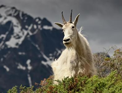Mount Kerkeslin Goat Lick