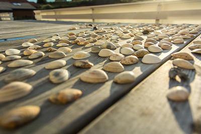 Shells in the Sun