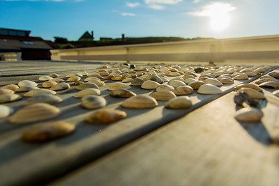 Shells in the Sun