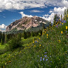 Mountain Wildflowers - Rustler Gulch Trail - Crested Butte, Colorado