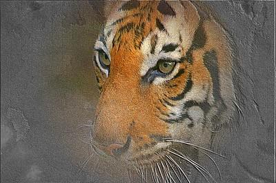Tiger Right