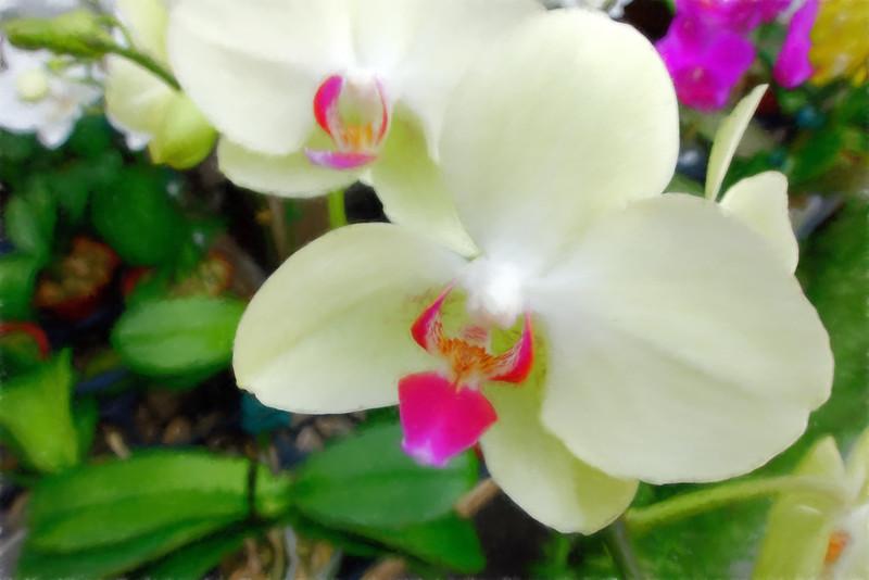 Florals_November 2014