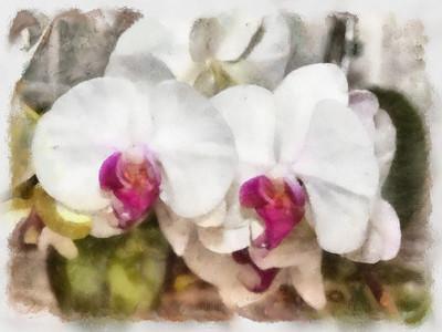 Flower Paintings_Feb. 2011