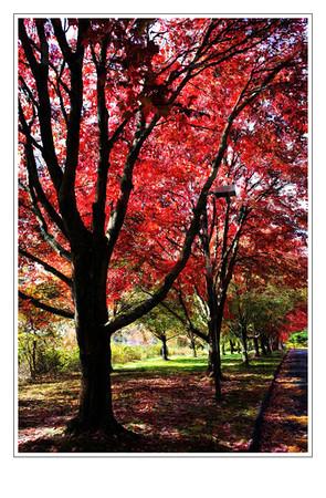 Foliage Paintings_Oct. 2012