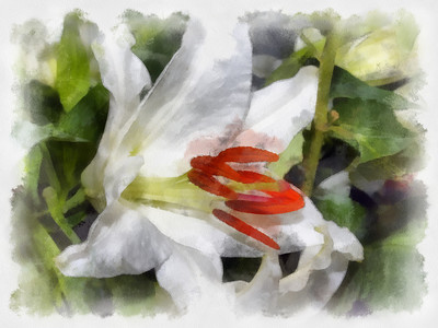 Painted Flower Photographs