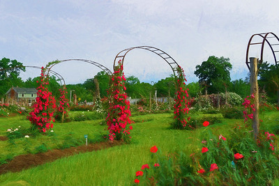 Paintings of The Rose Garden