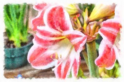 DSCF2418_DAP_Watercolor