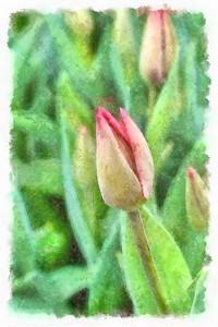 DSCF2479_DAP_Watercolor