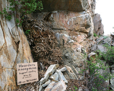This is a beautiful pack rat nest. Standing 6 feet tall in the corner of some boulders with a rock overhang to protect it from the rain.