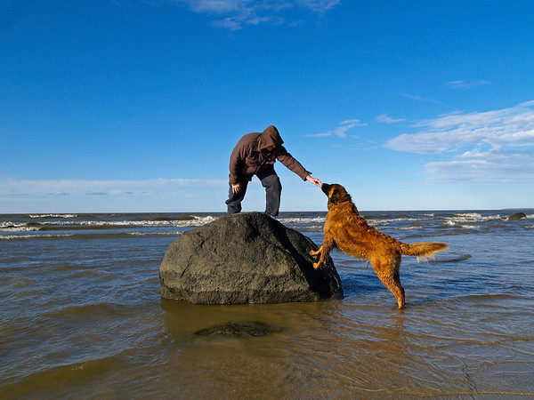 Worried dog performing rescue of chilly person stranded on large rock on Lake Winnipeg.