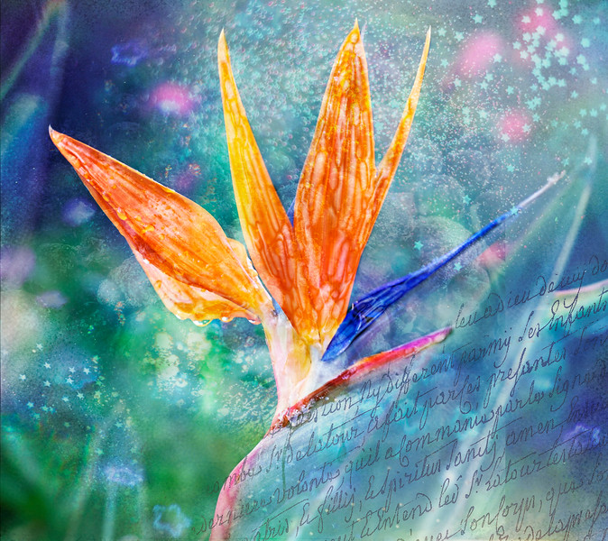 Bird of Paradise painted