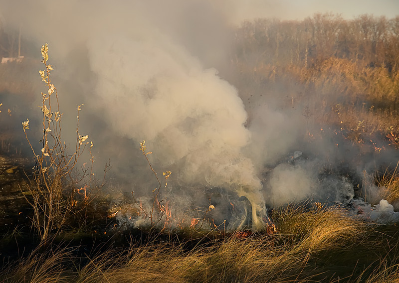 Healing the Prairie with fire