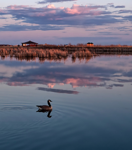 Evening at the marsh, nourishment for the soul.