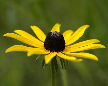 flower 8x10