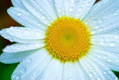 Flower_0020