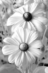 Flower_1542