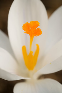 Flower_0262