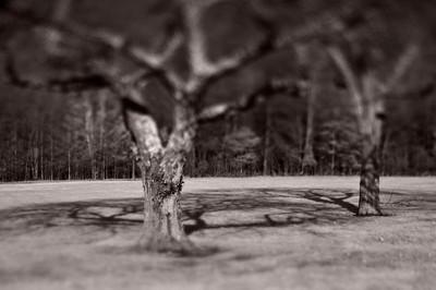 Trees---Sellersville, PA