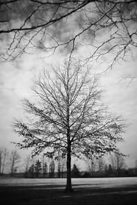 Tree---Sellersville, PA