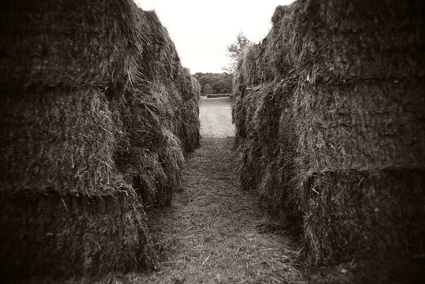 Hay Bales---Valley Forge Park, PA