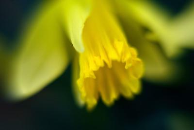 Spring Flower (1)