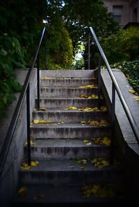 Yellow Leaves---Philadelphia, PA