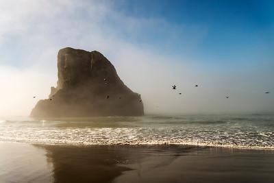 Birds and Mist