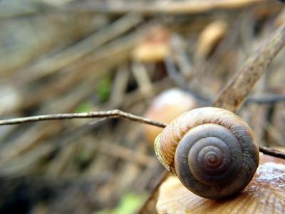 Bokeh Snail