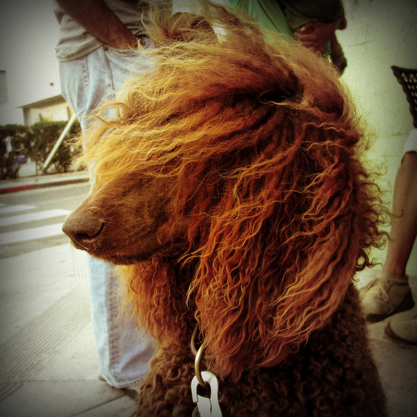 DOGGIE HAIR DAY