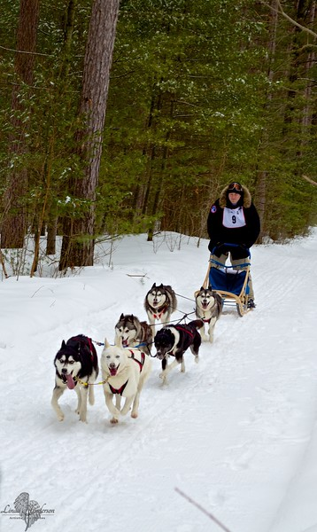 Sled Dog Race