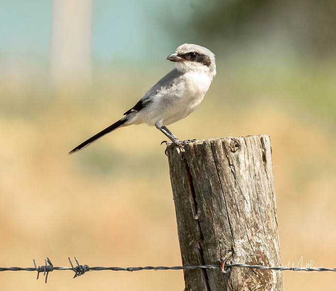 bird on a barbed wire-4