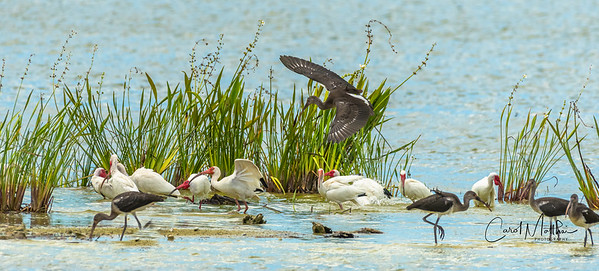 busy Ibis spa