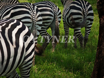 Tales From The Rear Lake Nakuru Nat Park Kenya Africa