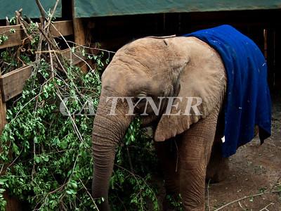 Orphaned Elephant Sheldrick Nairobi