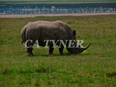 Rhino Lake Nakuru National Park Kenya