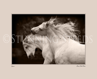 All Breed Gallery - Prints For Purchase