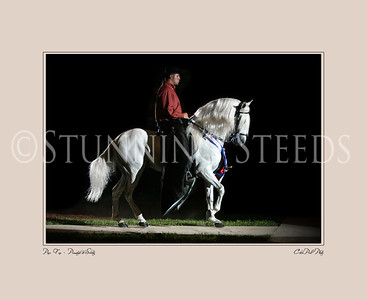 Paso Fino Stallions - Print Collection
