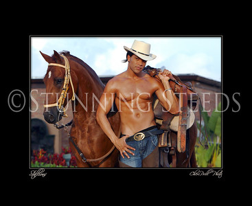 Stallions Series