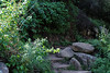 """""""Grotto"""" :  Poway Lake, CA"""