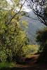 """""""Tree Tunnel"""" :  Poway Lake - Poway, CA"""