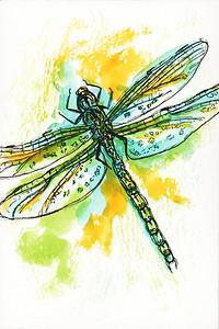Bold Dragonfly I