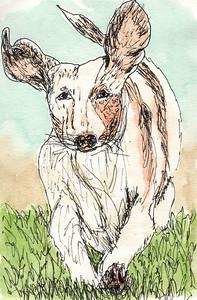 Dachshaund Puppy 1