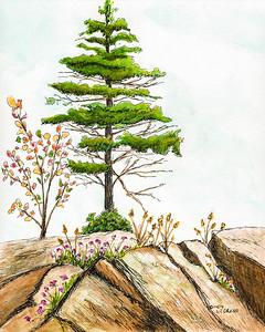 Spruce Tree on Rocky Cliff